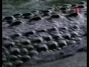 Сериал Мир природы 11 серия - Вторжение крокодилов