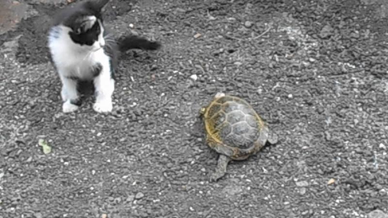 Любопытный котенок хочет подружиться с нашей мадамой=)