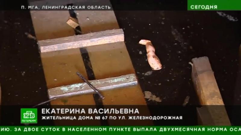 Впоселке Мга из-за потопа дворы превратились вполноводные реки [HTB.Ru - NTVSPB_2507_1610_MGA] (null) (via Skyload)