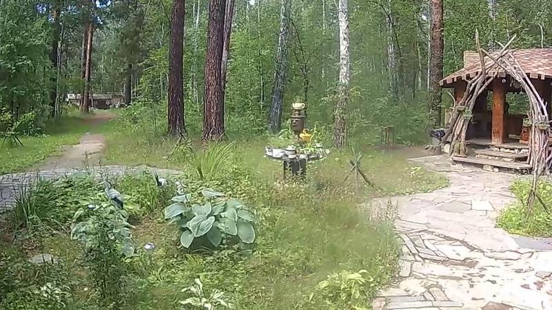 берендеев лес шикарная рубленная баня и беседка