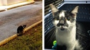 Man Saved Street Cat and Her Kittens Just In Time Before Winter