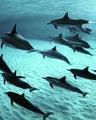 Underwater dreams · #coub, #коуб