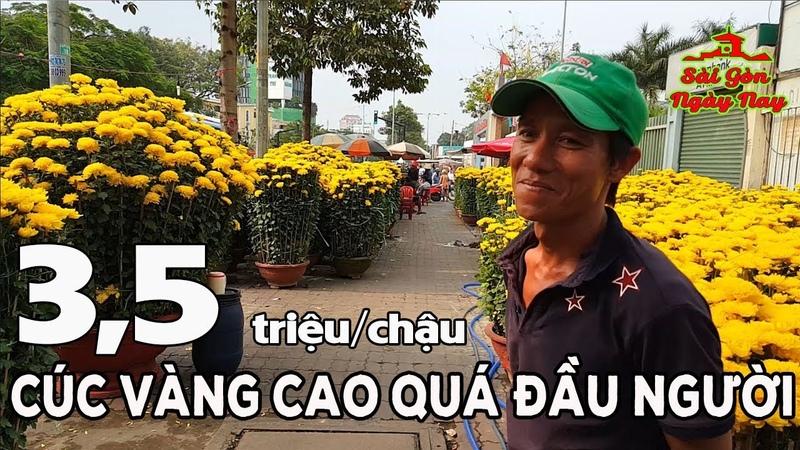 Chợ Hoa Tết ở Sài Gòn rực rỡ khiến Việt Kiều xa xứ thèm Tết quê nhà   Cúc vàng 3,5 triệuchậu