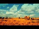 Дикие животные 24 часа 2 серия Африканская саванна