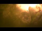 Видео фотосъемки ландышей