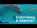 Как живется дельфинам в неволе