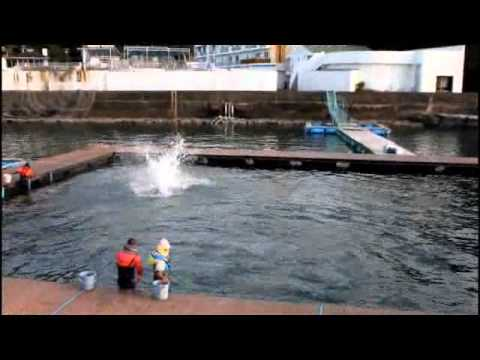 Trainers Work With Their Dolphins