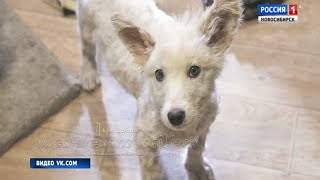 Новосибирцы всем миром спасли угодившего в гудрон щенка