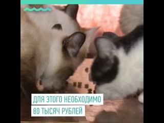 Жительница Барнаула приютила в своей квартире 61 кошку