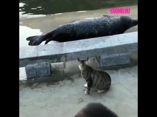 Кошка наваляла морскому котику