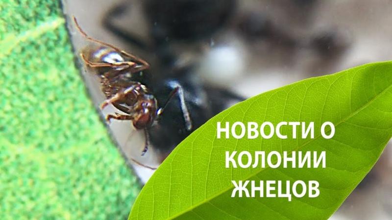 Новости о колонии жнецов