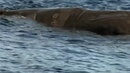 Фильм- Живая Природа- Океанская одиссея _ BBC. Natural World- Deep Ocean (2006) смотреть онлайн