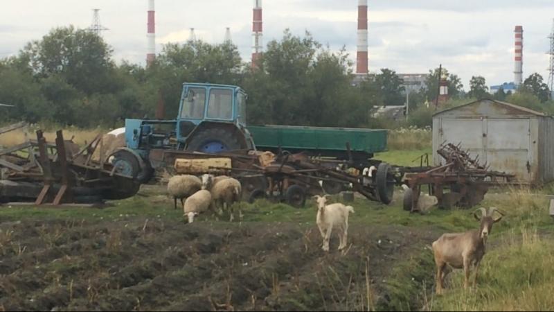 Команда Козлова Среднеуральск