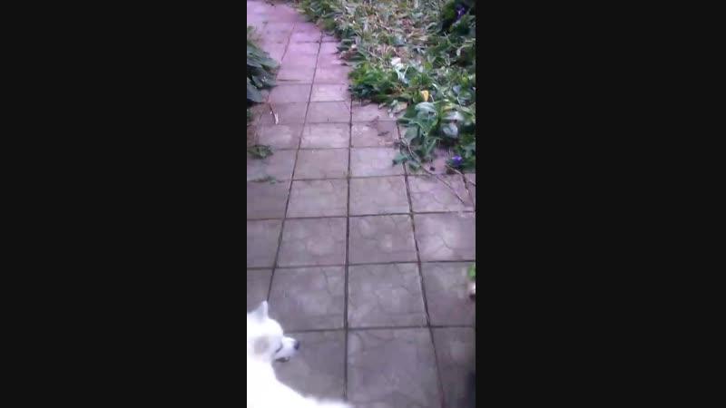 Мои собаки на даче.
