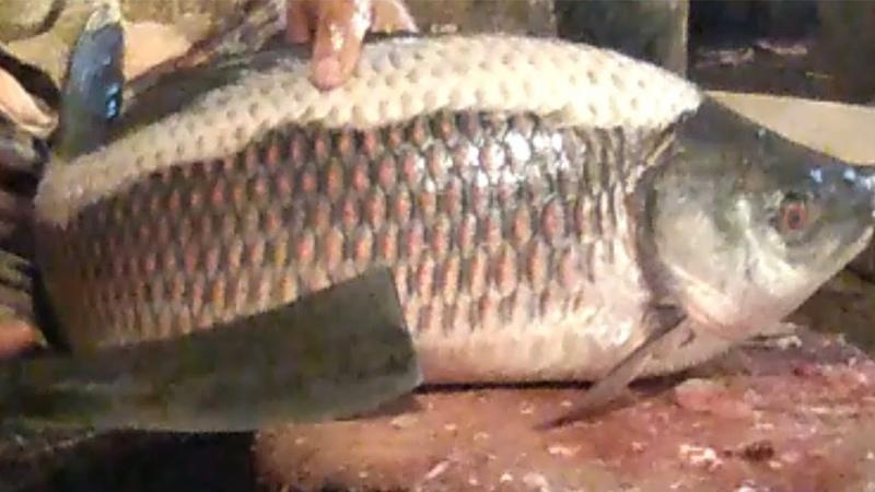 Amazing Rui Fish Cutting skills in Fish MarketProfassional Rui Fish Slicing