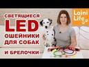 Светящиеся ошейники и брелоки для собак. Большой обзор HAUL