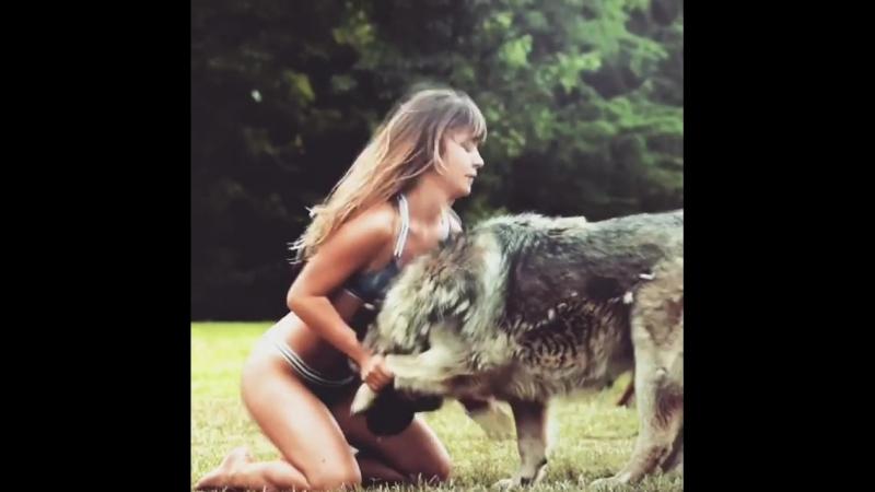 Nastik Kitsan Dog