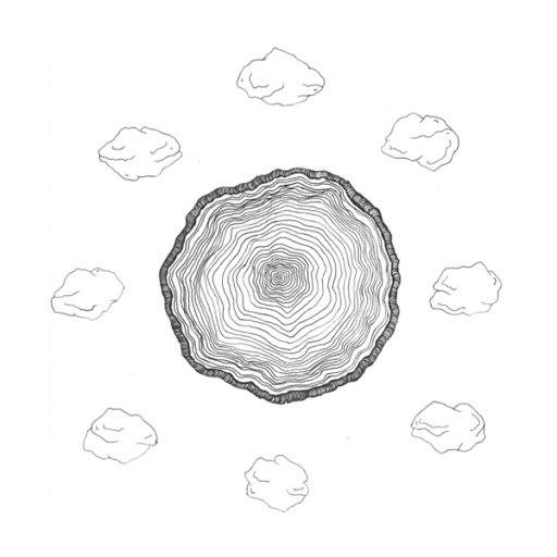The Vines альбом Circle of Stones