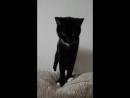 Отдам кошку в хорошие руки Лямурка 2 3года Чистая приученая Барановичи