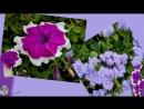 осенний вальс цветов