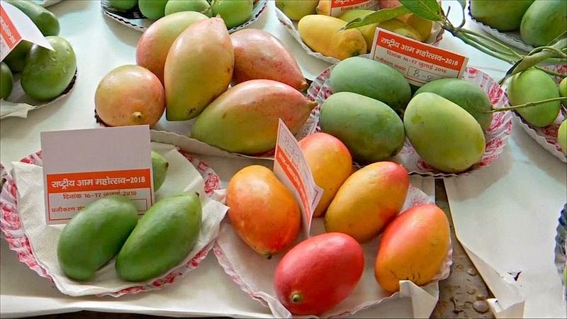 Фестиваль манго в Индии