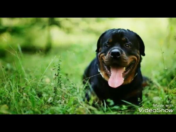 Цените верность собак, они никогда не предадут
