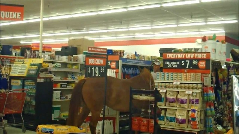 My uncle took his horse shopping today