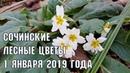 Весеннее 1 января | В Сочи уже распустились первые цветы | Субтропический рай