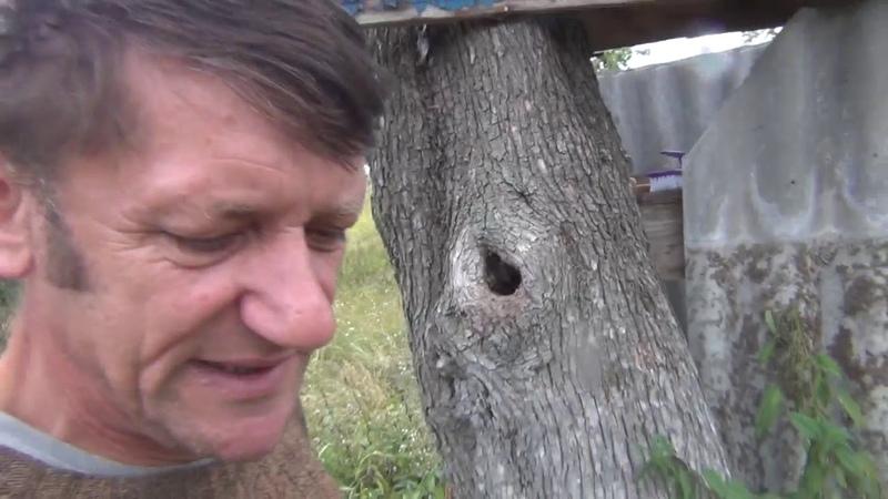 Двор ГРИБЫ Сад ПЧЁЛЫ Везде сую свой нос