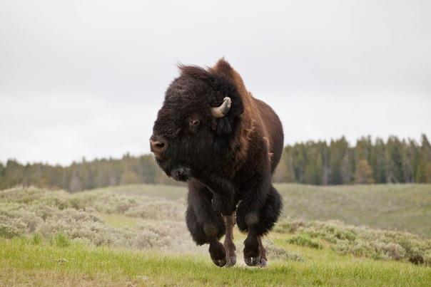 В английском языке существует корректное предложение из 8 одинаковых слов подряд и без знаков препинания: Buffalo buffalo Buffalo buffalo buffalo buffalo Buffalo buffalo