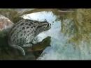 Камышовый кот рыбачит Видео с кошками spian scscscrp