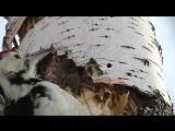 Замедленная съемка, как дятел долбит дерево, woodpecker breaks a tree in slow mo