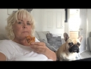 French bulldog is jealous of womans toast