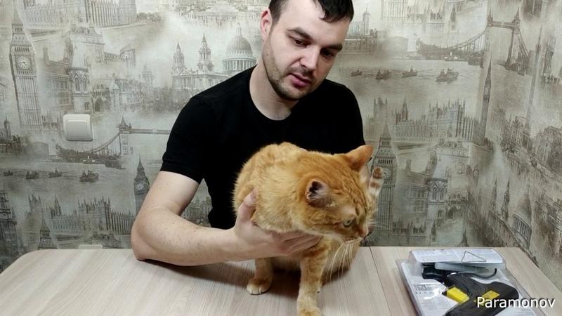 Обзор жирного кота!Кот по кличке Жирок пришёл на съёмку видео