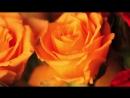 Müziksiz İlahiler - Bu Derdi Güller Anlar - İsmail Salih Sert.mp4