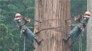Dangerous Fastest Chainsaw Skills Tree Cutting Fastest Equipment Tree Cutting Machines