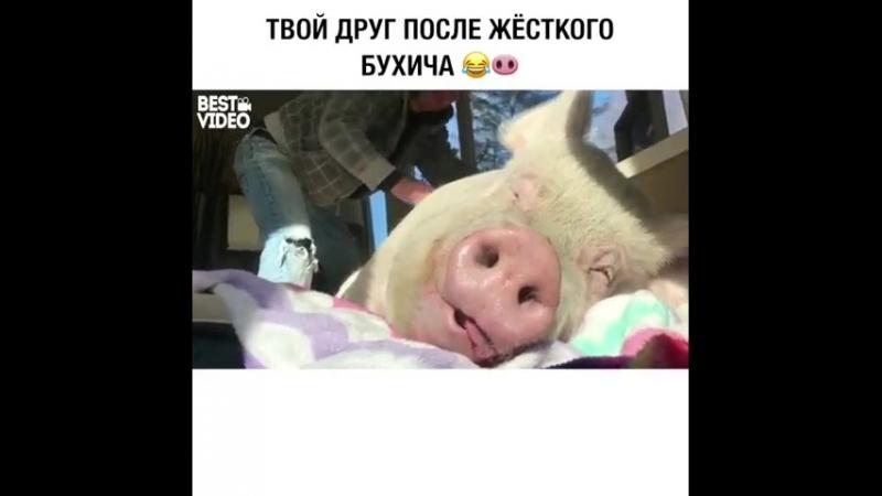 Свинья 🐽 блеать (480p) (via Skyload)