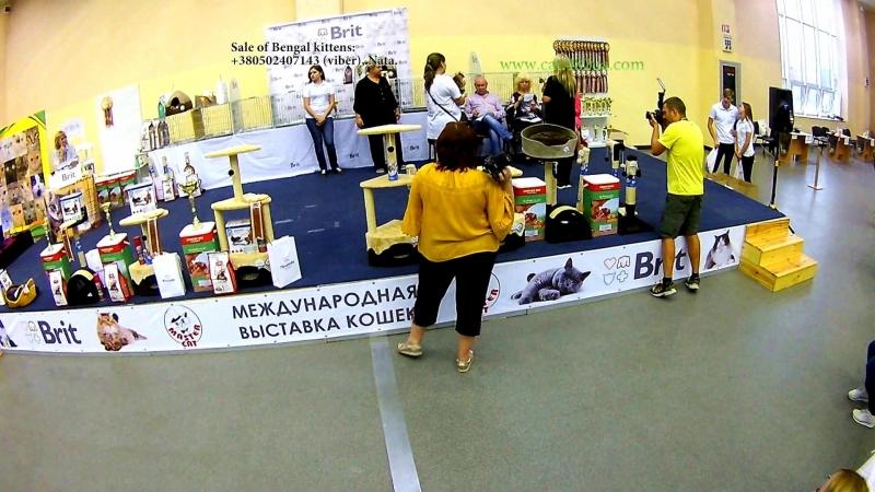 15092018, Выставка кошек, Харьков, Радмир Экспохолл, WCF, Best and show