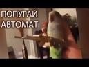 Попугай с автоматом Попугай стреляет из автомата Parrot with a gun