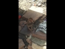 Agra monkey 2017