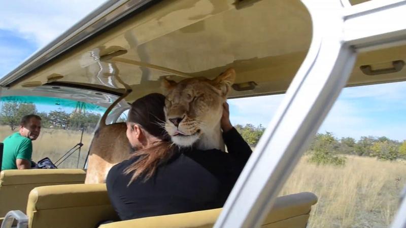 Наталья в ШОКЕ , она не была готова к таким отношениям со львами !