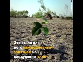 37 лет труда: как один человек вырастил огромный лес
