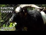 БУКЕТИК ТИМУРУ 26.09.2018