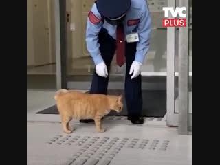 Котики vs. музей