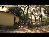 Основной инстинкт - охота в Камеруне - 6 серия