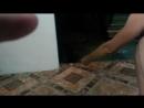 1 видео из п шепси ЕНОТЫ