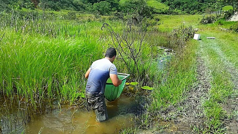 CORAGEM para ENTRAR nessas ÁGUAS - mas veja os peixes que pegamos - Pesca de Peneira