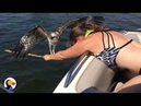 Drowning Osprey Bird Rescued by BRAVE Woman The Dodo