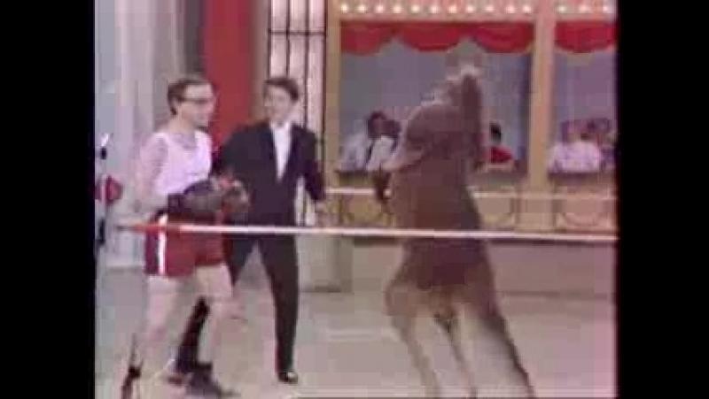 Circus Boxing Kangaroo_low