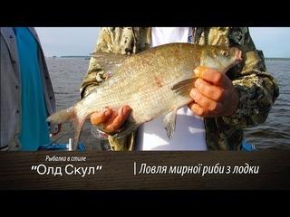 Ловля леща, густеры, подлящиков с лодки на Донку [ШоУолда №60]